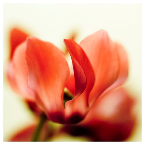 Flor 6